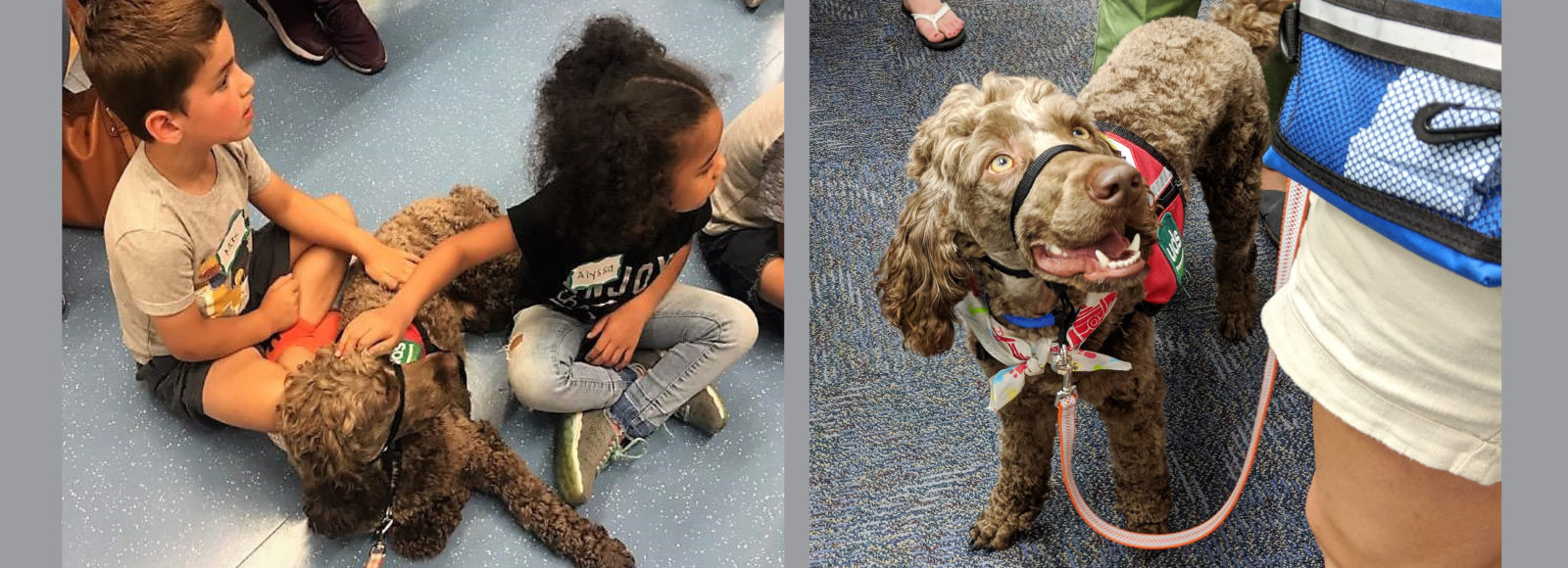PMEF helps fund second therapy dog for Penn Manor schools